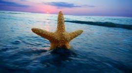 Starfish Desktop Wallpaper