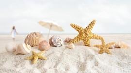 Starfish Desktop Wallpaper For PC
