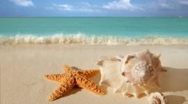 Starfish Photo Download
