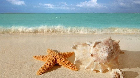 Starfish wallpapers high quality