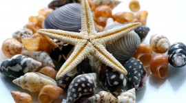 Starfish Picture Download