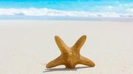 Starfish Wallpaper Download