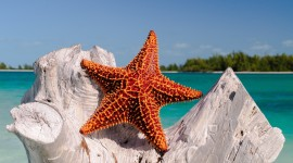 Starfish Wallpaper For Desktop