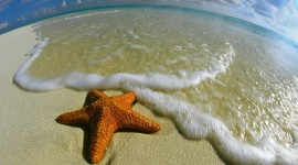 Starfish Wallpaper For PC