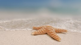 Starfish Wallpaper Free