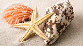 Starfish Wallpaper HD