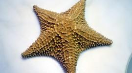Starfish Wallpaper High Definition