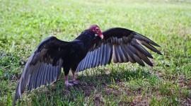 Vultures Photo