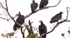 Vultures Pics