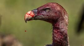 Vultures Wallpaper