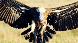 Vultures Wallpaper Full HD