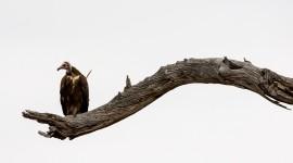 Vultures Wallpaper Full HD#1