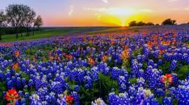 Wildflowers Best Wallpaper