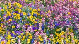 Wildflowers Desktop Wallpaper
