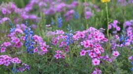 Wildflowers Wallpaper Download Free