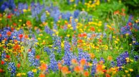 Wildflowers Wallpaper For Desktop