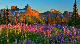 Wildflowers Wallpaper For PC