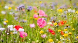 Wildflowers Wallpaper Free