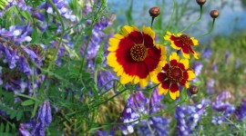 Wildflowers Wallpaper Full HD