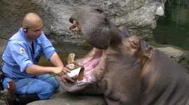4K Hippopotamus Wallpaper 1080p