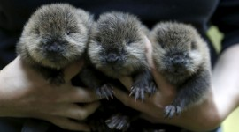Beavers Pics