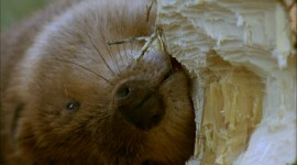 Beavers Wallpaper 1080p