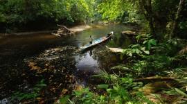 Borneo Wallpaper Free