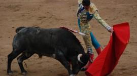 Bull Wallpaper Download Free