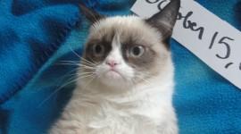 Grumpy Cat Best Wallpaper