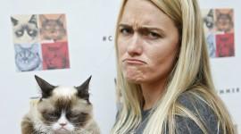 Grumpy Cat High Quality Wallpaper