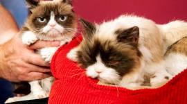 Grumpy Cat Wallpaper 1080p