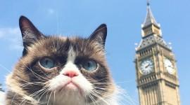 Grumpy Cat Wallpaper Download