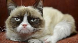 Grumpy Cat Wallpaper Download Free