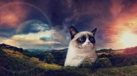 Grumpy Cat Wallpaper For Desktop