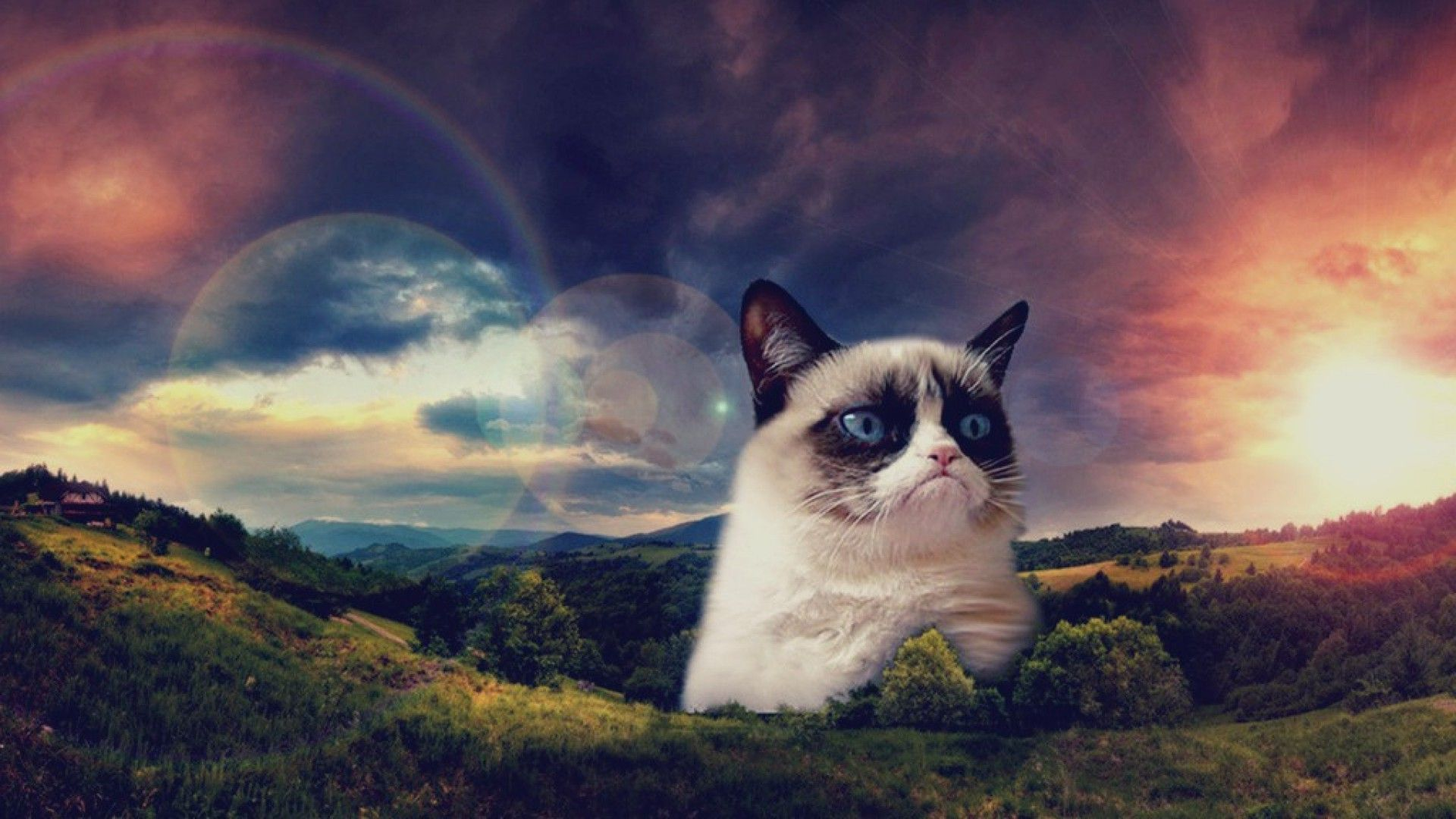 grumpy cat wallpapers high quality | download free