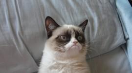 Grumpy Cat Wallpaper Free