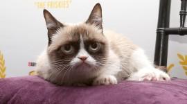 Grumpy Cat Wallpaper Full HD