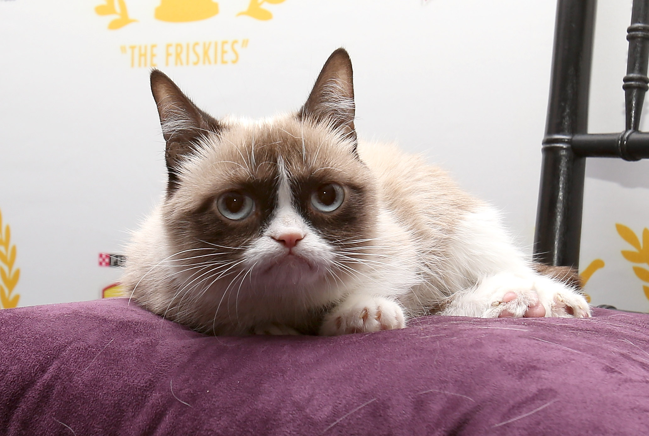 Grumpy Cat wallpaper ?? Download free stunning HD backgrounds for .