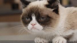 Grumpy Cat Wallpaper HQ