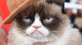 Grumpy Cat Wallpaper High Definition
