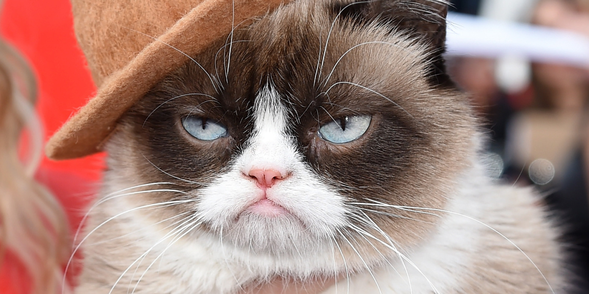 Grumpy Cat Wallpapers High Quality