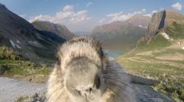 Marmot Wallpaper 1080p