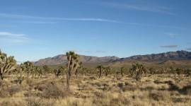Mojave Desert Wallpaper