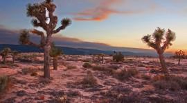 Mojave Desert Wallpaper For Desktop