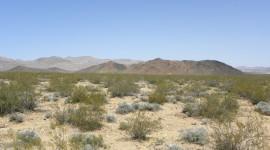 Mojave Desert Wallpaper High Definition