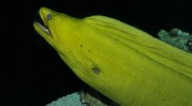 Moray Eels High Quality Wallpaper