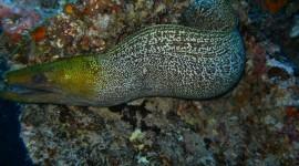 Moray Eels Wallpaper Download Free
