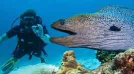 Moray Eels Wallpaper Gallery
