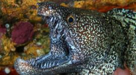 Moray Eels Wallpaper High Definition