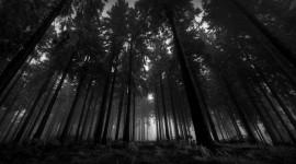 Night Forest Desktop Wallpaper